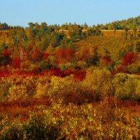 Просто Осень пришла... :: Милла Корн