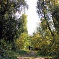 Тропинка в лесу :: раиса Орловская