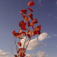красные листья :: георгий петькун