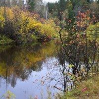 Осень на берегу. :: Наталья