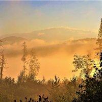 Утренним солнцем ошпарен туман :: Сергей Чиняев