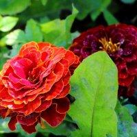 Осенник цветы :: Татьяна Богачева