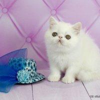 Зося и шляпка :: Светлана