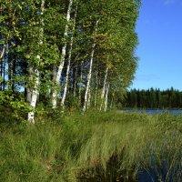 Карелия. Озеро Саркоярви. :: Владимир Ильич Батарин
