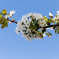 Сады в цвету :: Александр Дегтяренко