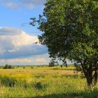 облака, дерево,...картина) :: Елена Кряжева
