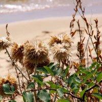 У пляжа на песочке :: Alexander Andronik