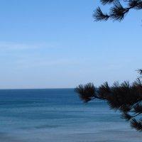 Ветки на фоне нежного моря! :: Варвара Маевская