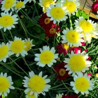 Летние цветы :: Светлана