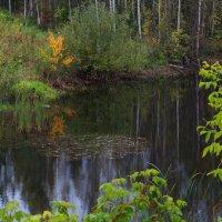 Лесное озеро... :: Валерий Молоток