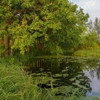 Пейзаж с дубами на берегу озера :: Александр Синдерёв