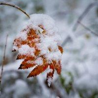 Первый снег (первого октября) :: Марк Э