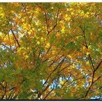 Оранжевое  настроение.  Осень. :: Ivana