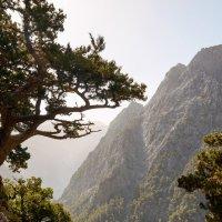 Платан острова Крит :: Андрей ЕВСЕЕВ