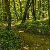 Лес в горах Адыгеи :: Игорь Сикорский