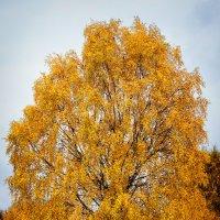 Осенний наряд :: Роман Дудкин