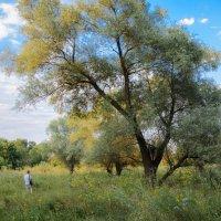 Зуевский ландшафтный парк, Донецкая Народная Республика :: Вера Корниенко