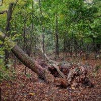 В лесу :: Наталья Лакомова
