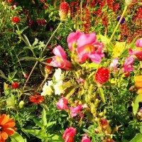 Эстафетацвета. Красный понедельник - красные цветы лета :: Наталья (ShadeNataly) Мельник