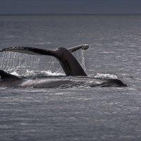 Игры морских гигантов :: Shapiro Svetlana