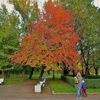 Любование багрянцем... :: Sergey Gordoff