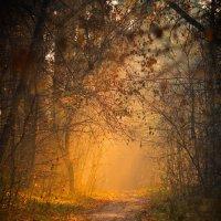 На лесной тропе :: Алексей Федотов