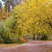 Осенний парк :: Константин Шабалин