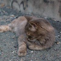 Бездомные кота Артём :: Сергей Бойко