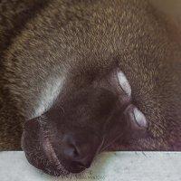 Спящий красавец :: Мария Мятова