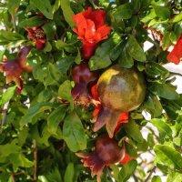 Весенний сад :: Александра
