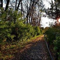 Осенние дорожки :: Любовь Чунарёва