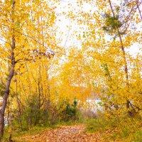Осень в парке. :: Вадим Басов