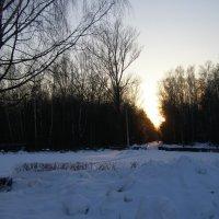 аллея в закатном солнце :: Анна Воробьева