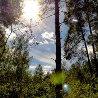 небо среди леса :: Александр Прокудин