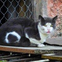 Сердитый котяра :: Маргарита Батырева