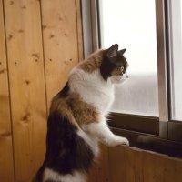 - Что там за окном творится? :: Элен .