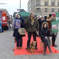 Всемирный день защиты животных :: Nina Yudicheva