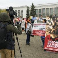 Северодвинск. Митинг в защиту животных (5) :: Владимир Шибинский