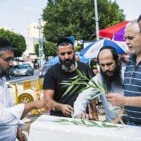 """Праздник Суккот: Выбираем растения Арава для """"Лулав"""" :: Aleks Ben Israel"""