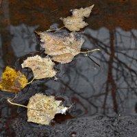 Всё ещё осень..хотя и выпал снег..:)) :: Леонид Балатский