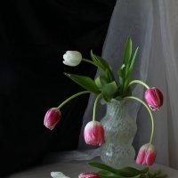 Тюльпаны :: Виктория