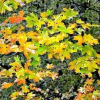 Осенние цвета! :: Михаил Столяров