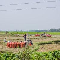 Вот это урожай ! :: Михаил Юрин