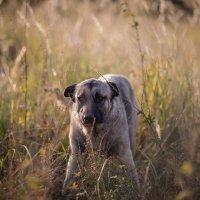 Пёс :: Евгений Артемьев