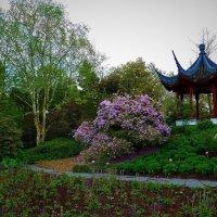 Loki Schmidt Garten. Hamburg :: Nina Yudicheva