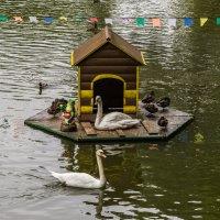 Лебеди :: Ruslan