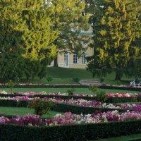 Пейзаж цветов :: Владимир Гилясев