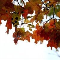 Осень..  осень.. :: Валерия  Полещикова