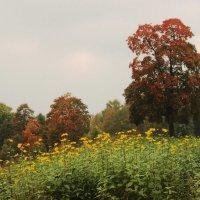 Осень :: Вера Моисеева