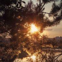 Прощальные лучи :: Алиса Колмагорова